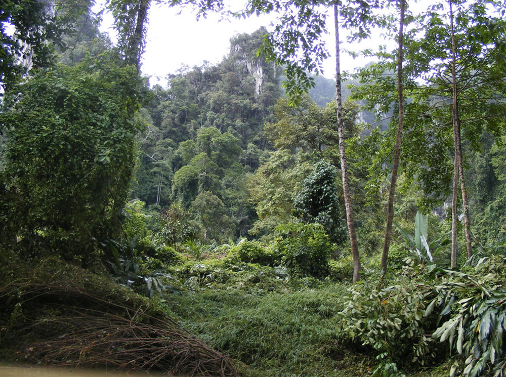 Джунгли южной части Таиланда