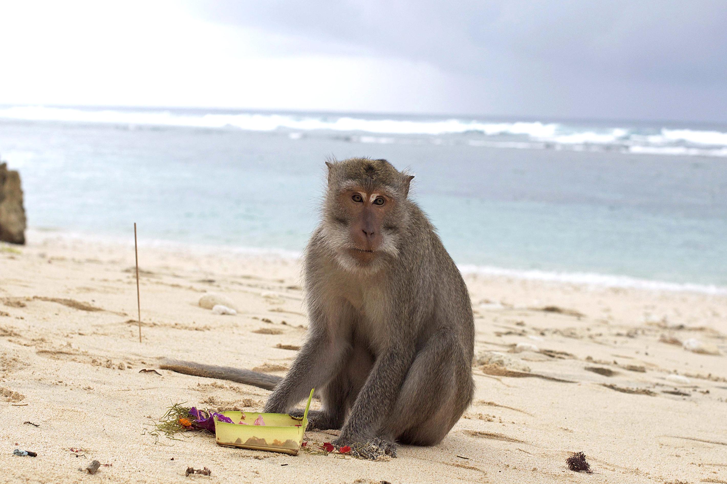 Обезьянка на пляже Monkey Beach