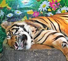 Животные Таиланда